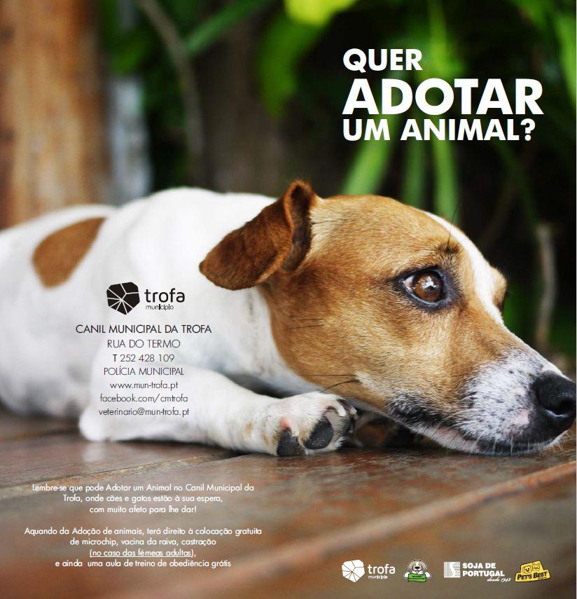 SOJA DE PORTUGAL e PET'S BEST apoiam campanha de adoção responsável