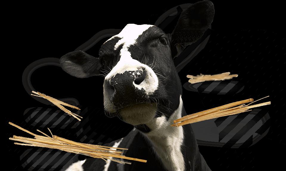 <p>Alimentos compostos para avicultura e pecuária</p>