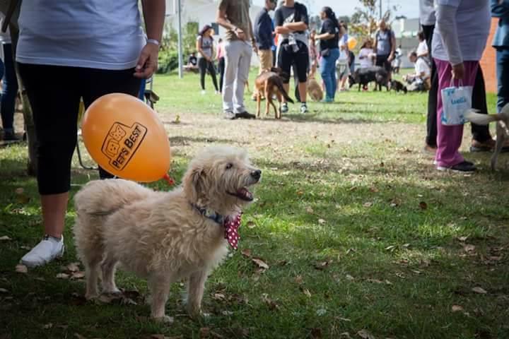 PET's BEST apoia a 11ª Cãominhada organizada pela APADO