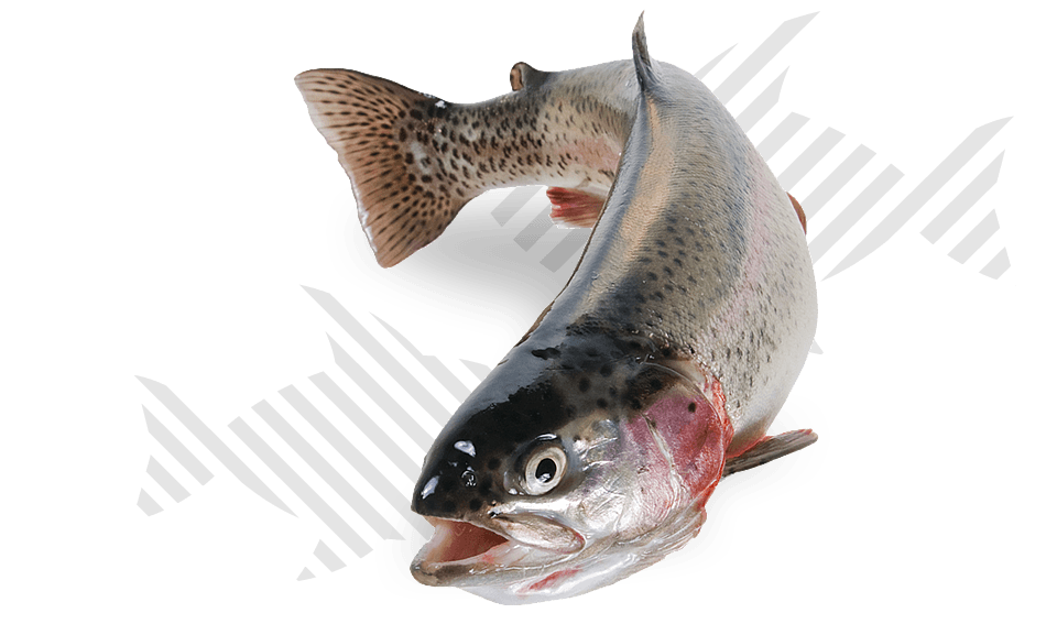 <p>Alimentos compostos para aquacultura</p>