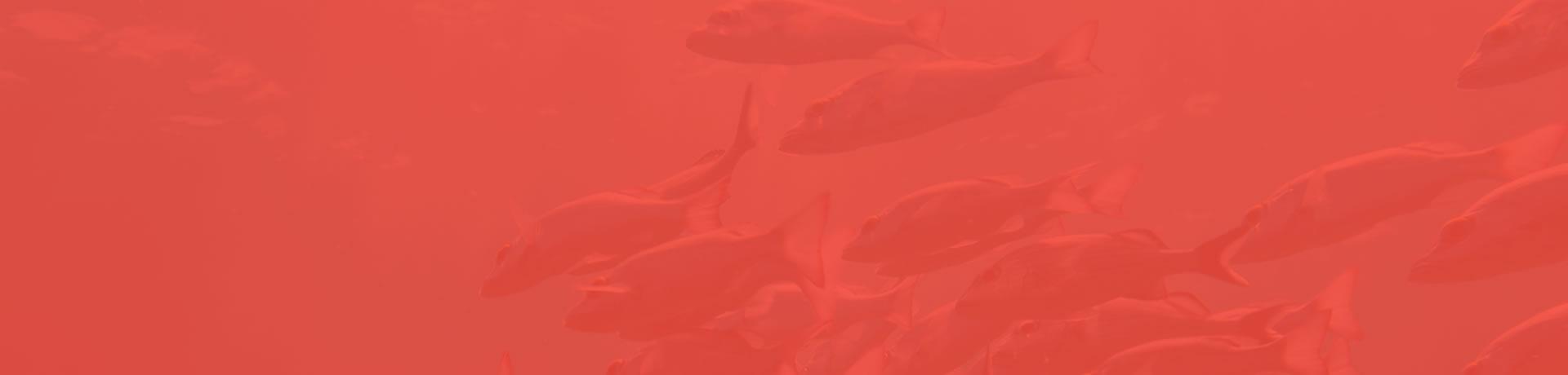 Alimentos Compostos para Aquacultura
