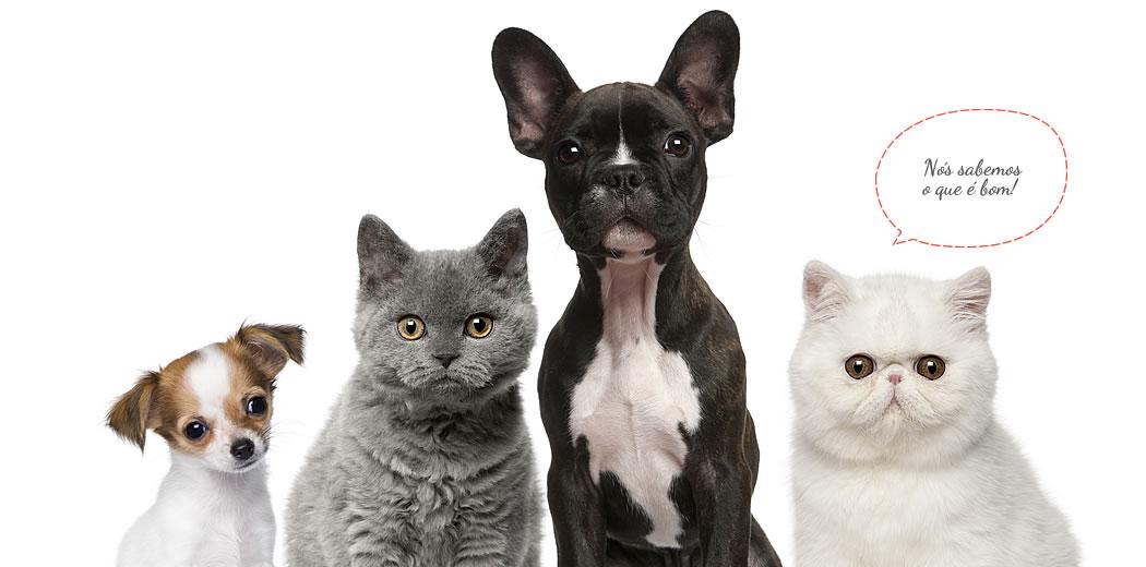 A PETS BEST Nutrition é a marca da área de...